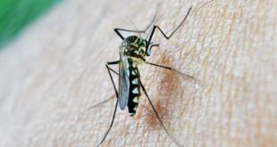 Malaria, arriva il vaccino