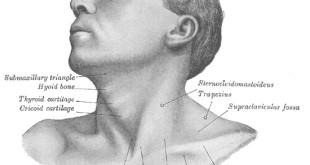Uomini, non sottovalutate le malattie della tiroide