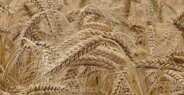 Nuove linee guida per la diagnosi della sensibilità al glutine