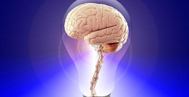 Cervello umano creato in laboratorio