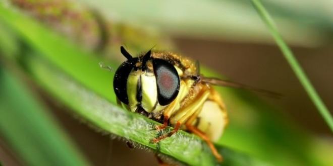 La tossina di una vespa contro il tumore