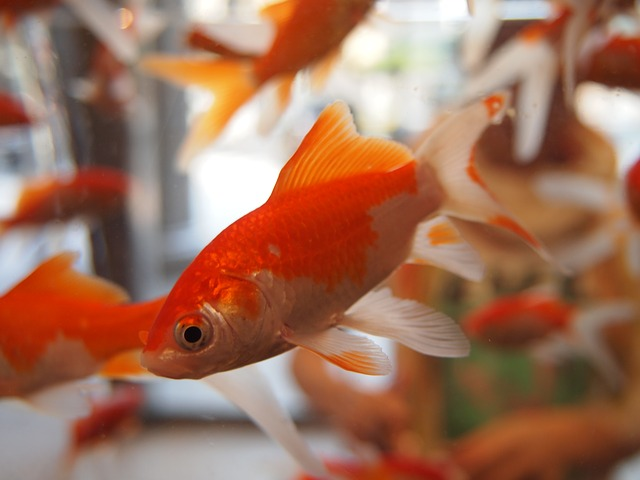 Il grande acquario di Ilaria Gaspari