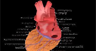 Aorta toracica, interventi in diretta