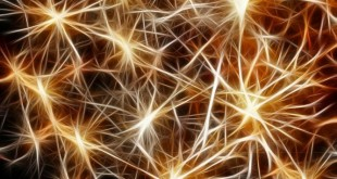 Dalla pelle ai neuroni