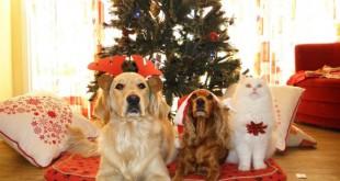 Il cane, le feste ed io