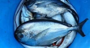 Pesce fresco italiano nelle mense sanitarie