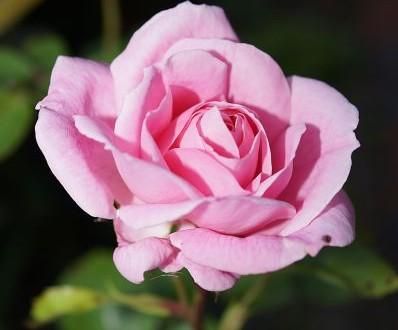 Bollini rosa, un premio agli ospedali amici delle donne
