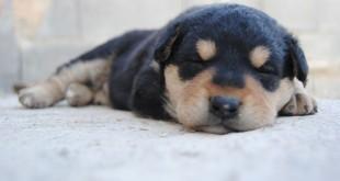 Gli animali provano emozioni proprio come gli umani?