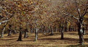 Quello del 2016 sarà un autunno con poche castagne