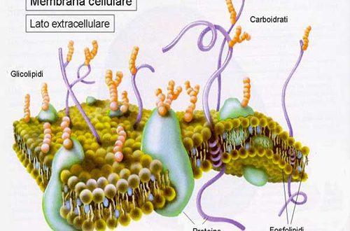 Colesterolo LDL: dimezzare il limite massimo per stare meglio