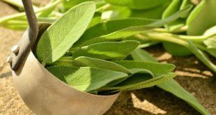 Erbe aromatiche in vaso: ecco come coltivarle in casa