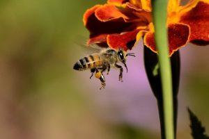 """Api, vespe, calabroni: consigli per non essere """"punti nel vivo"""""""