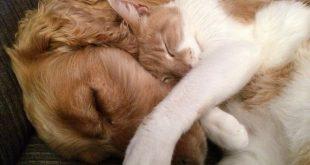 Giardia: dopo le vacanze dal veterinario per difendere cani e gatti