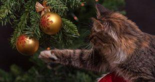 Natale da incubo: allontanare da noi il lato negativo delle feste
