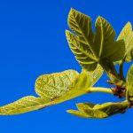 Cattiva digestione? Torniamo in forma con i rimedi naturali