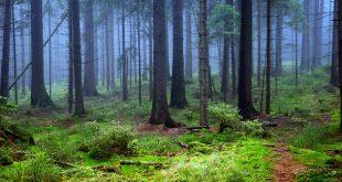 Bagni di foresta: ecco il potere di guarigione della natura