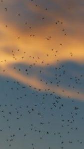 Zanzare inutili? No, solo fastidiose e qualche volta pericolose