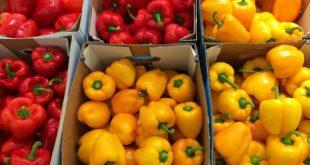 Melanoma e prevenzione: proteggiamoci con l'alimentazione