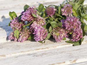 Disturbi della menopausa, quali piante utilizzare?