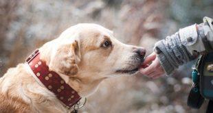 Cani amici dell'uomo: c'è chi li addestra per le persone con disabilità