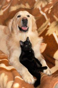 Cane e gatto: volete adottarli? Veterinario gratuito in Umbria