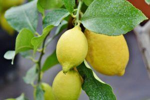 Olio essenziale di limone: ecco un elemento utile a corpo e mente