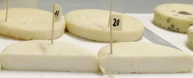 Produzioni casearie trentine: scoperti batteri benefici nei formaggi