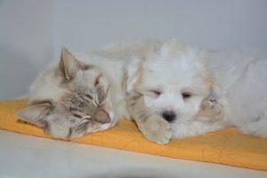 Dottor Bau & Dottor Miao: la prima mutua veterinaria per cani e gatti