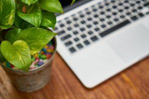 Piante in ufficio: con esse aumenta la produttività