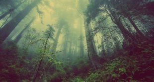 Ambiente e Giornata mondiale: sette azioni per essere cittadini Green