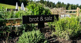 Conoscere le erbe: a Nova Ponente si può ritornare alla natura