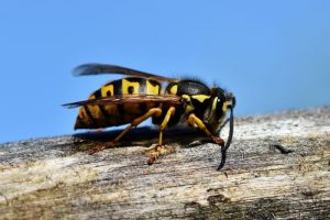 Punture di insetti e morsi di animali: che cosa bisogna fare