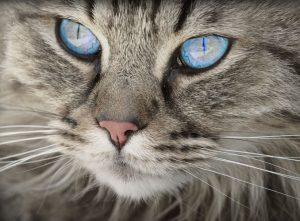 Regno animale: gli amici a quattro zampe sono utili nella pet-therapy