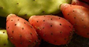 Alimenti 10 e lode. Fichi d'India: alleati nella lotta al colesterolo