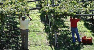 Vino e territorio: il valore della tradizione, della cultura e della passione