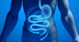 Dieta del microbiota per tornare in forma: cosa dice la ricerca scientifica?